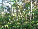 hutan rakyat kebondalem (2)