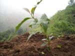 Keunggulan tanah di Indonesia